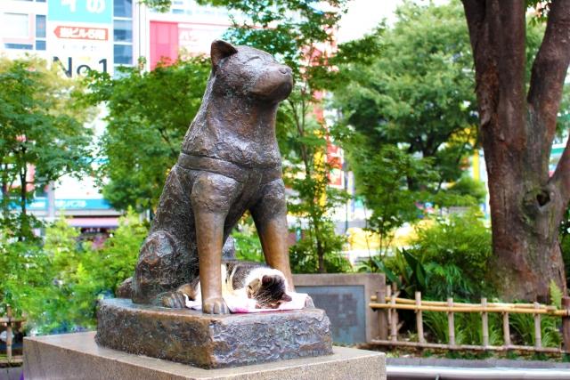 渋谷ハチ公画像